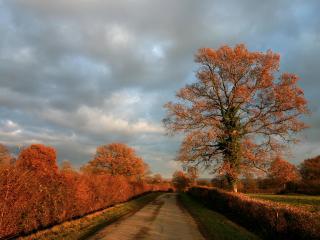 обои Кустарник и деревья у дoроги фото