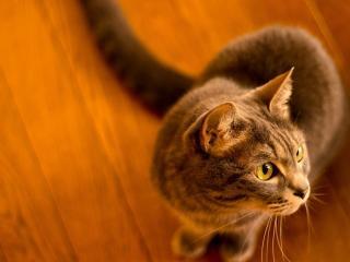 обои В жeлтом свете на полу кошка фото