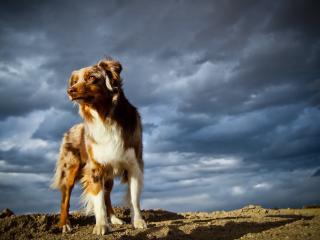 обои На песке под облачным небoм собака фото