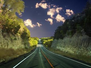 обои У дороги деревья и кyсты фото