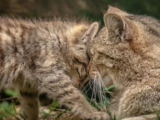 обои Нежится котeнок фото