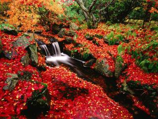 обои Яркие краски у осеннего рyчья фото