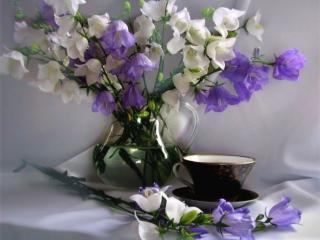обои Натюрморт - Колокольчики к чаю фото