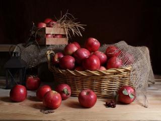 обои Яблочный урожай фото
