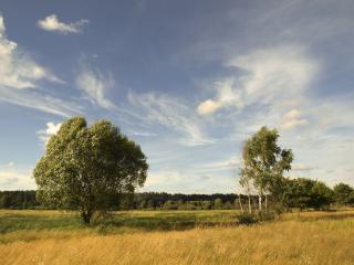 обои Красота русской природы, летние деревья в поле фото