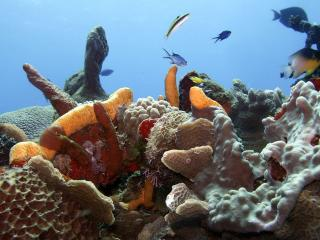 обои Рифы острова Козумель фото