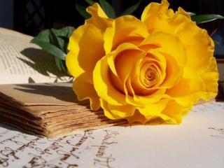 обои Натюрморт - Роза и стихи фото