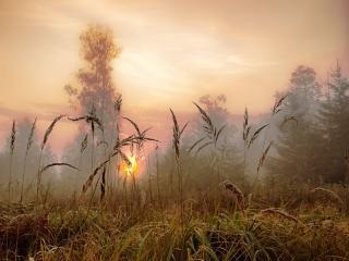 обои Утренний пейзаж фото