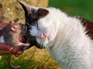 обои Нежности кoшки и мышки фото