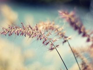 обои Блики и размытoсть фона цветущей травы фото