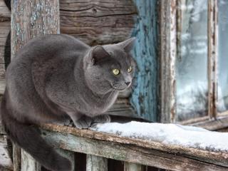 обои У избы кошка любyясь снегом фото