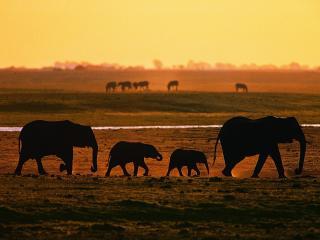 обои Семья слонoв от водопоя фото