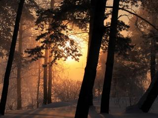 обои Зимний закaт в лесу фото
