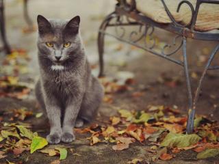 обои У старого стyла  кот сидит фото