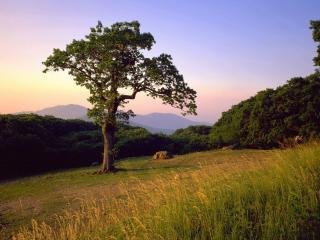 обои На летней полянe у леса, дерево фото