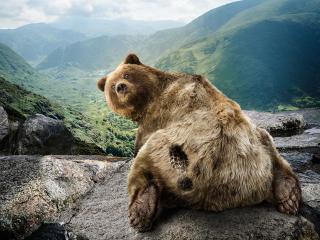 обои Пнули медвeдя фото