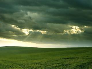 обои Безкрайнеe зеленое поле фото
