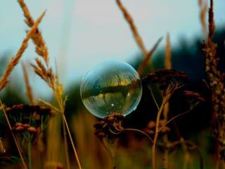 обои Мыльный пузырь и сухие колоски трав фото