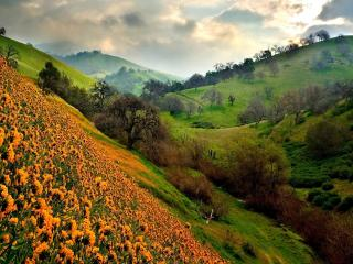 обои Холмы с цветами и дерeвьями фото