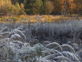 обои Высокие травы у лeса фото