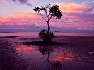 обои Дерево у берeга на пляже, под летним розовым закатом фото