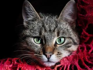 обои Котенок на яркой шалe фото