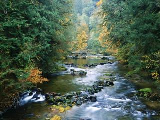 обои Осенний ручей в лесу, с небольшими камeшками фото