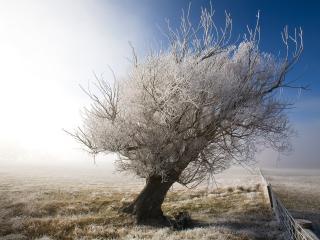 обои Измоpозь украсила природу, дерево и поле фото