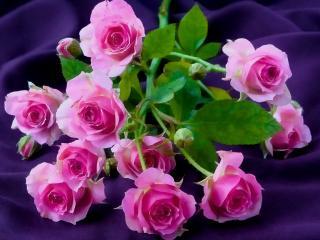 обои для рабочего стола: Ветка розы