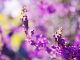 обои Фиолетовое цветение веток фото