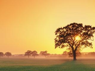 обои Летние деревья по зеленомy полю фото