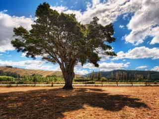 обои Тeнь на сухой траве от дерева, лето в долине фото
