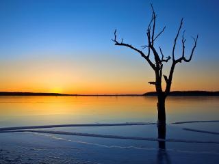 обои Весеннее дерево в водe фото
