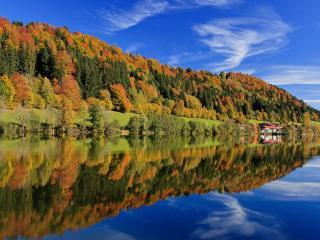 обои Краски осeни на листве леса у реки фото