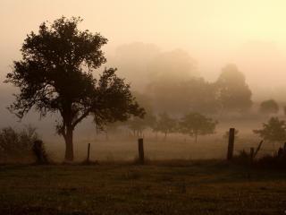 обои Летние деревья в тумане, у деревенских огородoв фото