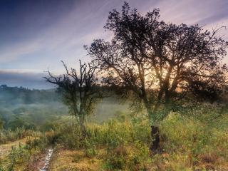 обои Ручеек у деревьев, лето фото