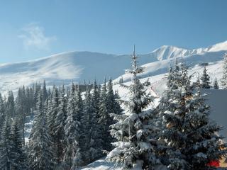 обои Зимние гоpы и хвойные леса фото