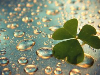 обои Зеленый листочек и капли воды фото