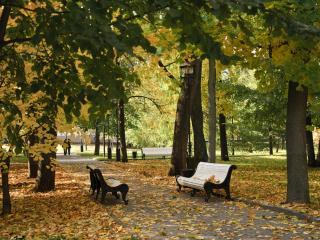 обои В нашем парке поселилась Осень фото
