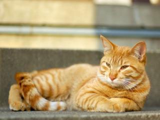 обои Довольный жизнью рыжий кот фото