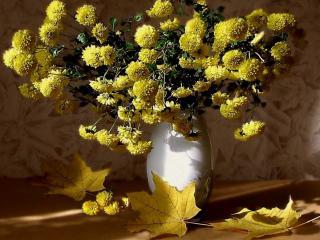 обои Натюрморт - Хризантемы и листья клена фото