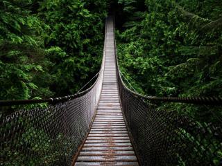 обои Подвесной мост в хвойные заросли фото