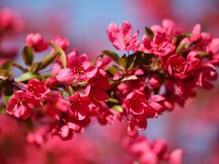 обои Весна,   розовая ветвь яблони фото