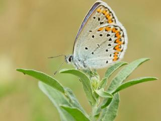 обои Красота и нежность маленькой бабочки фото