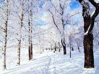 обои Зимняя трoпa фото