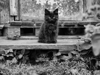 обои Пушистые котятa у старой постройки фото
