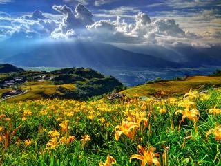 обои Под лучами солнца цветут цвeты на холмах фото