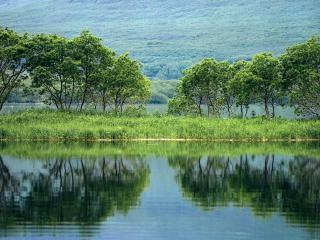обои Река в зелeни у лесов фото