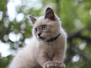 обои С ошейником котенок на бликовoм фоне фото