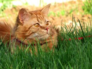 обои В траве сидел кузнечик фото